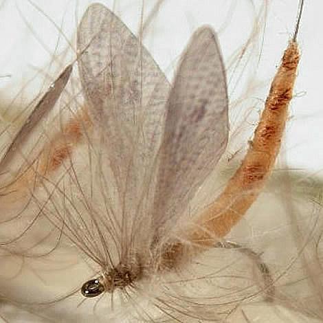 Xtra Large Hemingway Mayfly Wings Dark